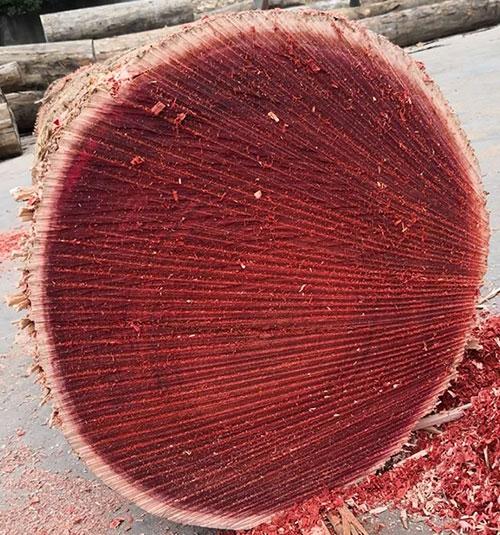 红花梨原木